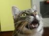 fenek: (кот)
