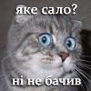 karasikliza: (якэ сало?)
