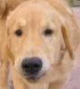 vanilla1sky: (hund)