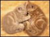 fromheavens: (kittens)