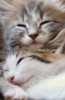 fromheavens: (2cats)