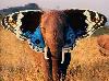 jacklinka: (slon)