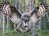 jacklinka: (owl)