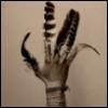 lalechuza: (Hand)