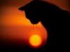 tigra_tales: (кошачий закат)