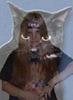 lognatal: (кошка)