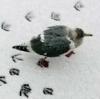 adel_lj_backup: (sneg)