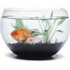 sanychka: (аквариум)