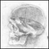 nilsky: (череп леонардо)