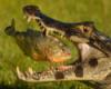 nilsky: (Крокодил и пиранья)