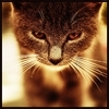 la_miracle: (wild cat)