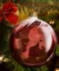 voljena: (очень новогоднее)