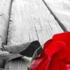 someplacetobe: (lilly_c: rose on boards)