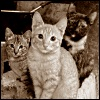 ostro_goth: (z Cats -- forge cats)