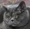 donmigel_62: (кот - учёный)