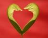 oksamytka: (love)