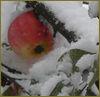 elvit: (random_winter_apple)
