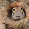 blog_vadim: (Рыбка в норке)