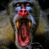 jameass: (ape)