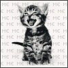 reynardine: (cat_meow)