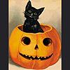reynardine: (hallowcat_pumpkin)