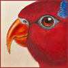 nightdog_barks: Illustration of a red parrot's face in profile (Red Parrot)