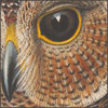 nightdog_barks: Illustration close-up of an owl's face (Owl Face)