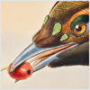 nightdog_barks: Illustrated close-up of a bird's head grasping a red berry in its beak (Bird with Berry)