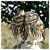beautiful_dreams_25: Two owls (Soul mates)