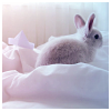 beautiful_dreams_25: Rabbit (In a sea of white)