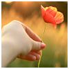 beautiful_dreams_25: a poppy (Hope is a wonder of the world)