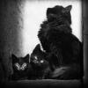 ruina_sibilina: (familia) (Default)