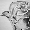 musyc: Black and white image of rose (B/W: Rose)