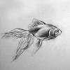 ozqueen: (misc: goldfish)