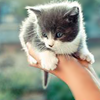 recessional: (here, take this) a hand holding out a kitten (personal; it's too dangerous to go alone)