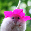 recessional: a mouse wearing a trumpet-like flower as a hat (personal; zere a problem with my hat?)