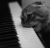 emef: (pianocat)