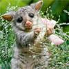 jessan: (wombat)
