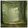 branchandroot: leafy forest path with mist (forest path with mist)