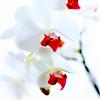 moonlightrick: (stock # white flowers)