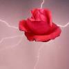 lightning_rose: (Lightning Rose)