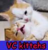 burnadette_dpdl: (VC Kittens 2)