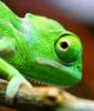 chameleon_feet: (pic#7646810)