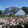 dalmeny: a field of roses extends to the futuristic curve of the Bicentennial Glasshouse, like a crashed spacecraft (rose garden)
