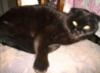 oner: (кошка на стуле)