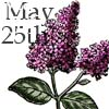 gen_is_gone: a sprig of lilac, with May 25th as a description (how do they rise up?)