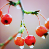 jo_blogs: (berries)