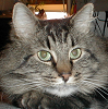 sherrold: picture of my cat, grumps (cat, grumps)