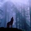ext_561307: (wolfstarblade)