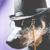 theleaveswant: dog wearing tophat and monocle (doggie detective)